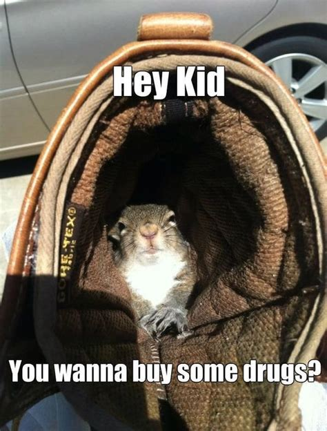 Dead Squirrel Meme - squirrel meme funny squirrel pictures