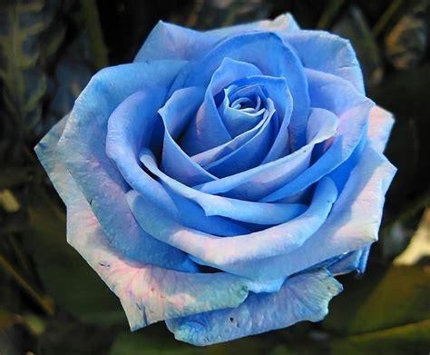 imagenes de rosas blancas naturales ni un puntito somos en el universo tiempo de rosas