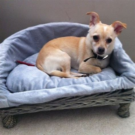chihuahua beds 55 best images about wicker dog beds on pinterest