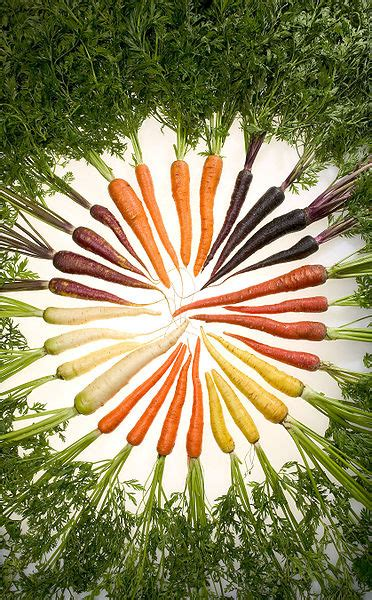 original color of carrots file carrots of many colors jpg wikimedia commons