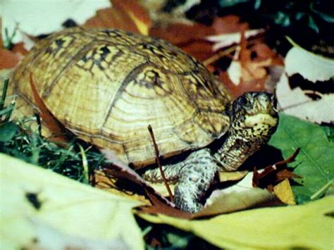 Heat L For Aquatic Turtles by Articles Guide To Choosing Your Land Based Turtle
