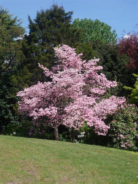 botanical gardens cafe melbourne daylesford botanical gardens and cafe melbourne