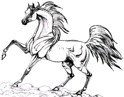 a arabian pony colouring pages