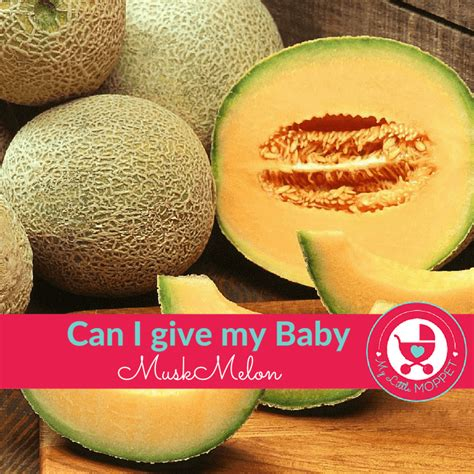 can i give my can i give my baby muskmelon kharbuja my moppet