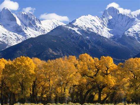 landscape autumn trees  yellow leaves snow capped