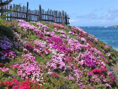 Botanical Gardens Fort Bragg Ca Mendocino Coast Botanical Gardens Rawfoodchef