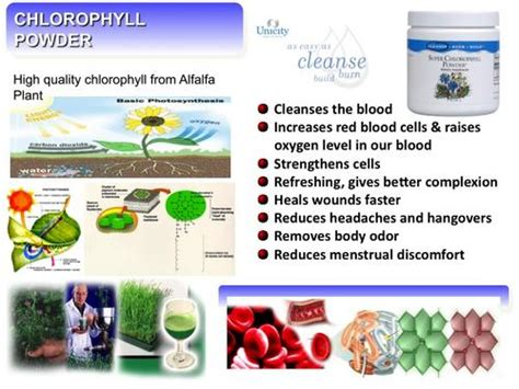 How Does Chlorophyll Help Detox Your by Homeopathic Remedies Chlorophyll Powder