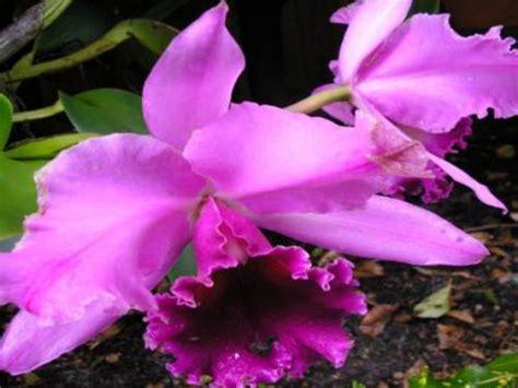 immagini fiori tropicali sfondi fiori tropicali per desktop 10126