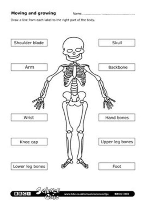 simple bone diagram label skeleton simple