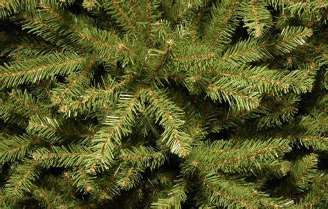 dunhill christmas tress home depot fir christimas trees 7 5 ft unlit dunhill fir artificial tree duh3 75 the home depot