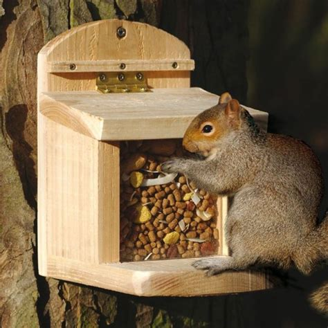 squirrel feeder wildlife houses wildife