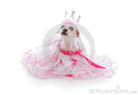 Tiera Pink Soft pered princess or ballerina pet stock image image 34614291