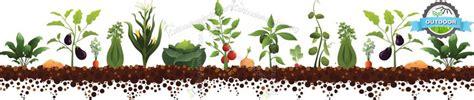 coltivare outdoor in vaso coltivazione outdoor consigli utili per coltivare all aperto