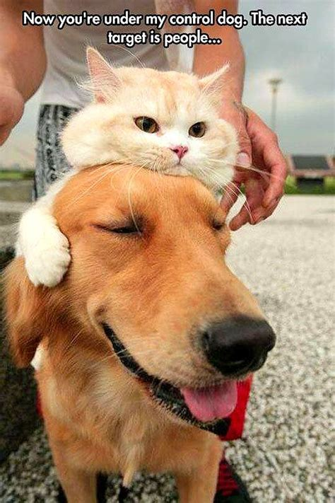dogs with cats dogs wearing cat hats