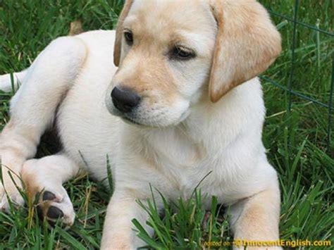 imagenes de animales lindos lista perros bonitos del mundo