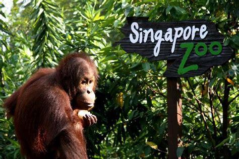 Zoologischer Garten Einkaufszentrum by Reisen Nach Singapur Entdecken Sie Singapur Mit Easyvoyage