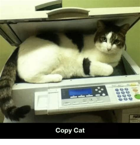 Copy Cat Meme - 25 best memes about copy cat copy cat memes