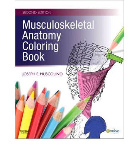 anatomy colouring book book depository musculoskeletal anatomy coloring book joseph e