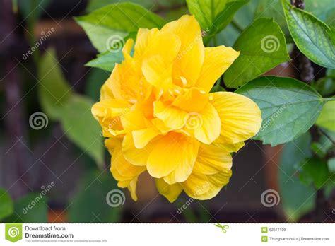 belva flower image gallery sc flower