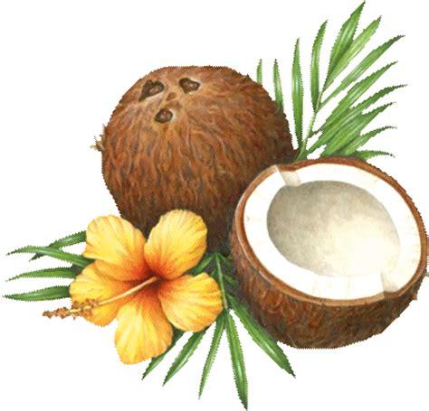 film antillais coco la fleur noix de coco