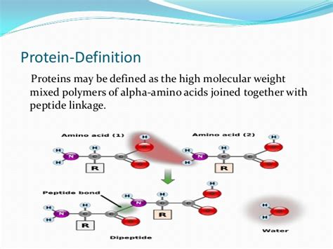 protein meaning proteins simplified