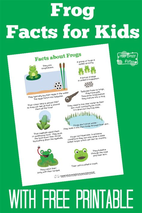 fun frog facts for kids itsy bitsy fun
