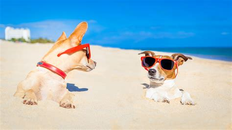 florida beaches that allow dogs pet friendly condos in destin fl seascape resort