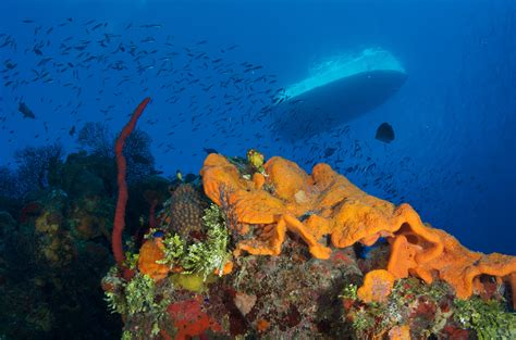 dive travel divetech enters new phase in dive travel