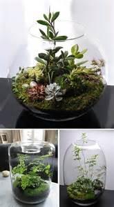 succulent terrarium house decorators collection