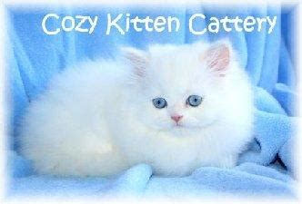 karma big stories of small cats who change our lives books cat breeder lovetoknow