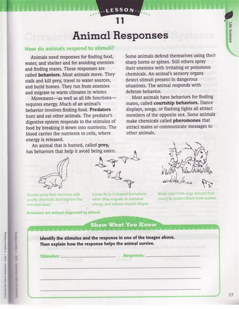 Ecology Worksheets by Levels Of Organization Worksheet Letravideoclip
