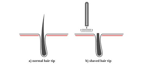 shaving hair causes it to grow back darker and thicker busting shaving myths laser center of milford milford