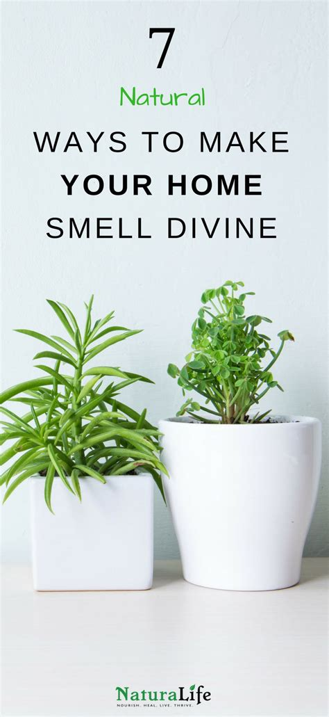 7 Ways To Make Your Home Smell by 7 Ways To Make Your Home Smell Naturalife