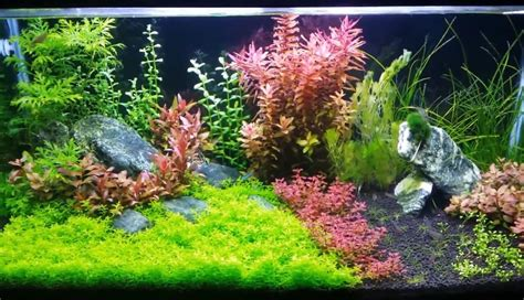 led aquarium lighting planted tank 7 best led lights for planted tank 2018 reviews guide