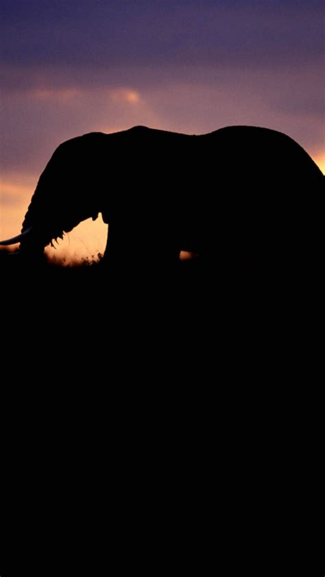 wallpaper iphone elephant elephant silhouetted at twilight wallpaper free iphone