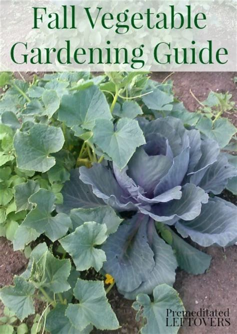 Fall Vegetable Gardening Guide Winter Vegetable Garden List