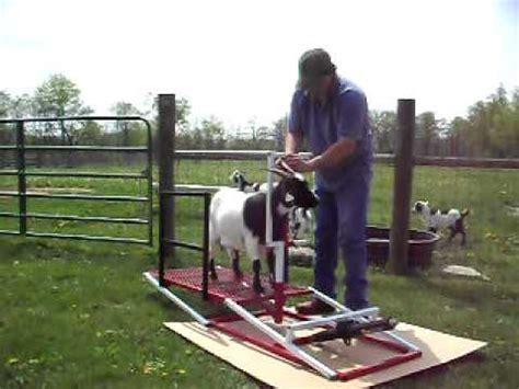 sheep shearing table plans goat sheep fitting hoof trimming shearing lift