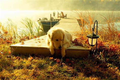 how to landscape a dog friendly garden sunset natura boat dog lantern landscape scenery view forest