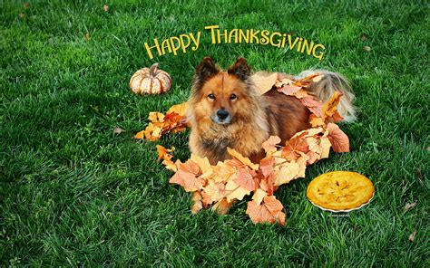 thanksgiving puppy thanksgiving wallpapers by kate net page 1