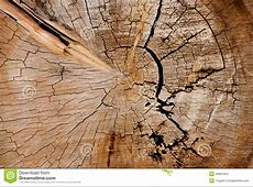 Inside Tree Trunk texture stock photo. Image of aging ... Firewood Prices
