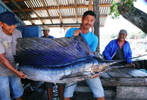 Tuhuk Marlin eloratour wisata indonesia