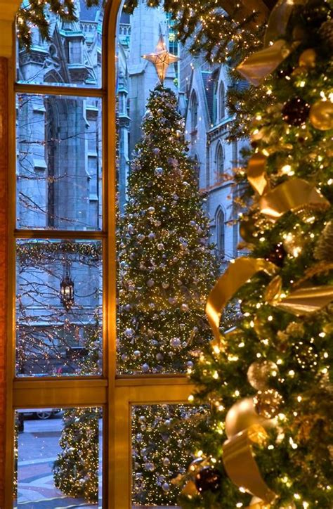 beautiful outside beautiful outdoor christmas tree design pinterest