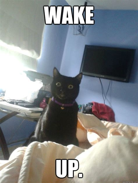 Wake Up Meme - wake up overly attached cat quickmeme