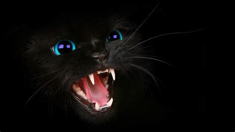 black kitten hd wallpaper hd black cat blue eyes wallpaper by harriepatemandesigns