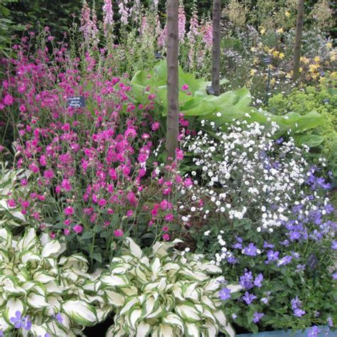 cottage garden perennials uk untitled document www kinverhorti org uk