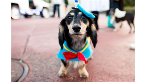 halloween themes with dogs disney dog halloween costume ideas perfect for your pet