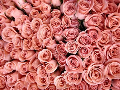 tumblr themes roses flower tumblr structure flower
