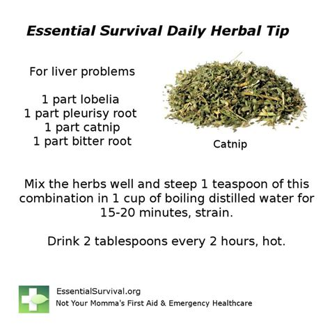 Bitter Herbs For Liver Detox by 1000 Images About Health Liver On Health