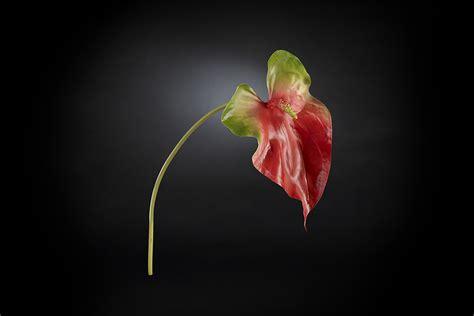 ingrosso fiori treviso ingrosso fiori artificiali di alta qualit 224 per