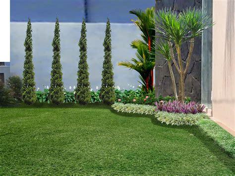 Bibit Teh Hijau gambar rumput gajah mini arya flower